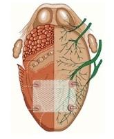 malla_anatomica