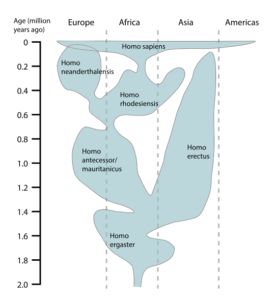 Human_evolution_chart-en.svg