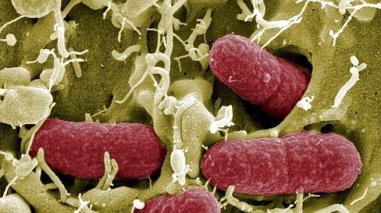 bacterias-intestinales-flora